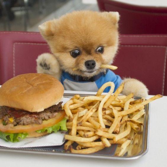 Pomsky Dog Food Brands