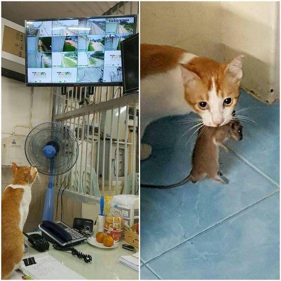 Esse ratinho pensou que ia escapar mas ele não teve…