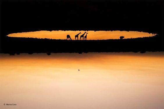 Les magnifiques photos des vainqueurs du Wildlife Photographer of the Year 2015