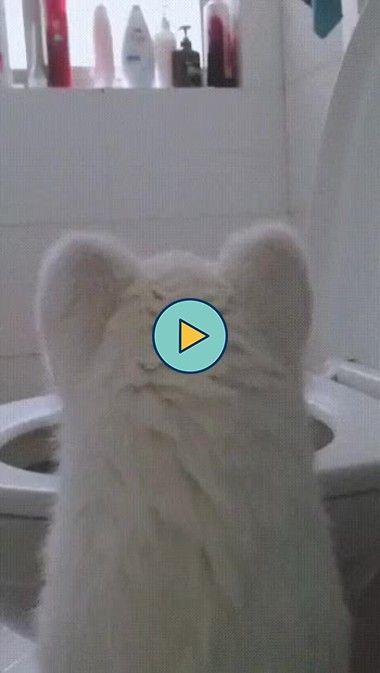 o gatinho estaa com sede kkkkk