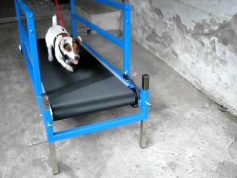 How To Make A Carpet Mill For Dogs Carpet Vidalondon Dog Treadmill Diy Dog Stuff Dog Yard
