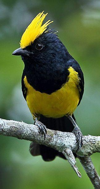 Les plus beaux oiseaux  063d78c78d128b42d25098d59a4518f2