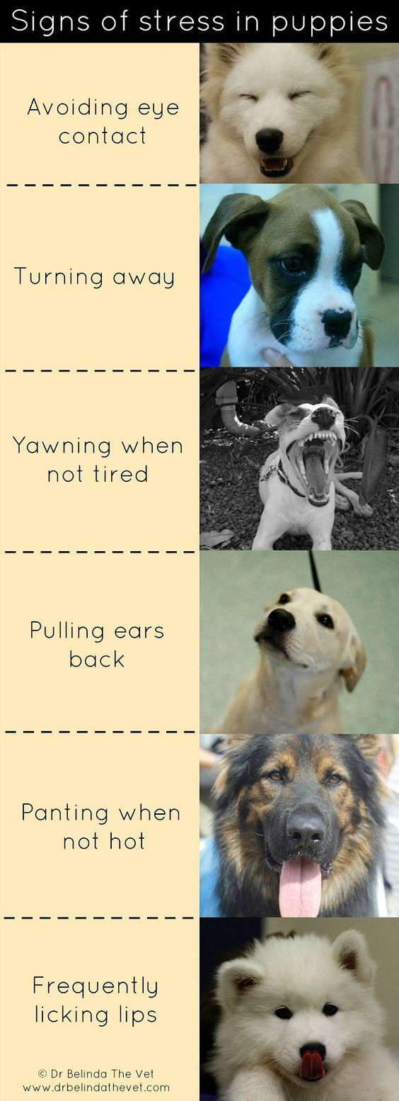 Signs of puppy anxiety