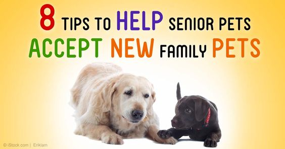 Are you planning to add another furry family member to the household? Here are some things to keep in mind. http://healthypets.mercola.com/sites/healthypets/archive/2015/01/19/8-tips-adding-new-pet.aspx