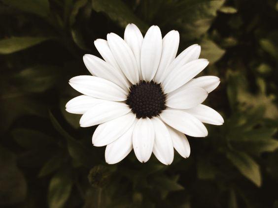 Twee: Flor bonita de Gramado (RS)