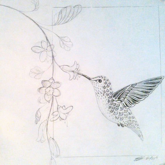 Stylized drawing of a hummingbird drinking from flowers. Pencil, sketch, art, nature, vine, bird. By Shalom Schultz Designs.