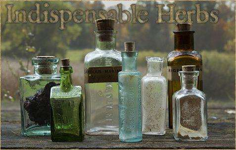The Ten Most Indispensable Herbs ~ Matthew Woods