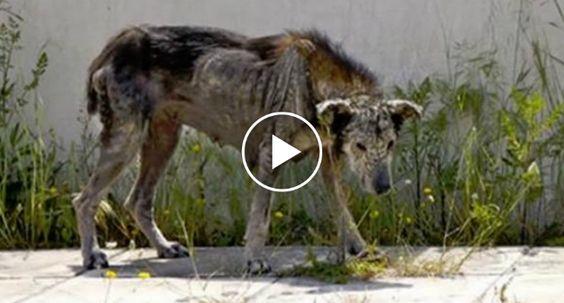 Cadela Petrificada – Uma Viagem Da Morte à Vida http://www.funco.biz/cadela-petrificada-viagem-da-morte-a-vida/