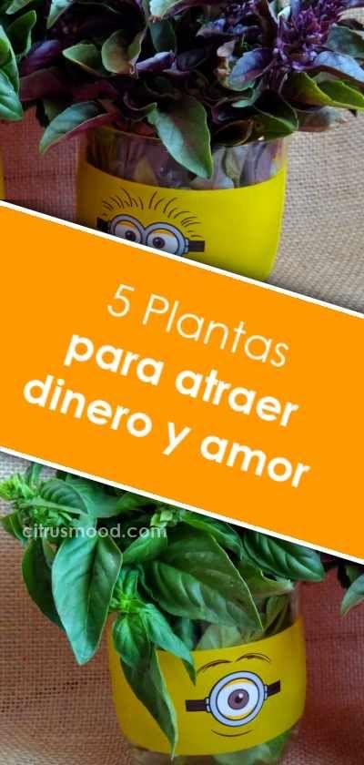 5 Plantas Para Atraer Dinero Y Amor Curiosidades Dinero Amor Hogar Plantas Plants Feng Shui Tips