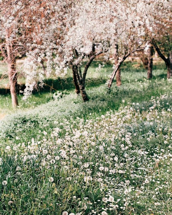Cherry Blossom In The Garden Garden Blossom Spring Summer Orchard Spring Aesthetic Scenery Nature