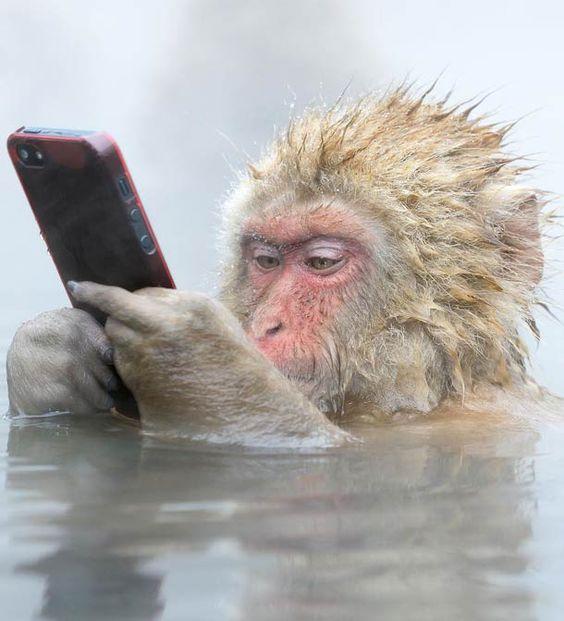 Pour célébrer le Wildlife Photographer 2014, la 50ème édition de ce prestigieux concours dephotographie animalière, le National History Museum de Londres