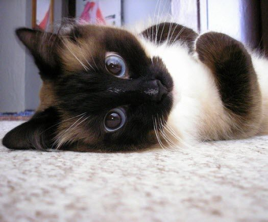It is possible that this is one of the cutest cats we have ever posted.