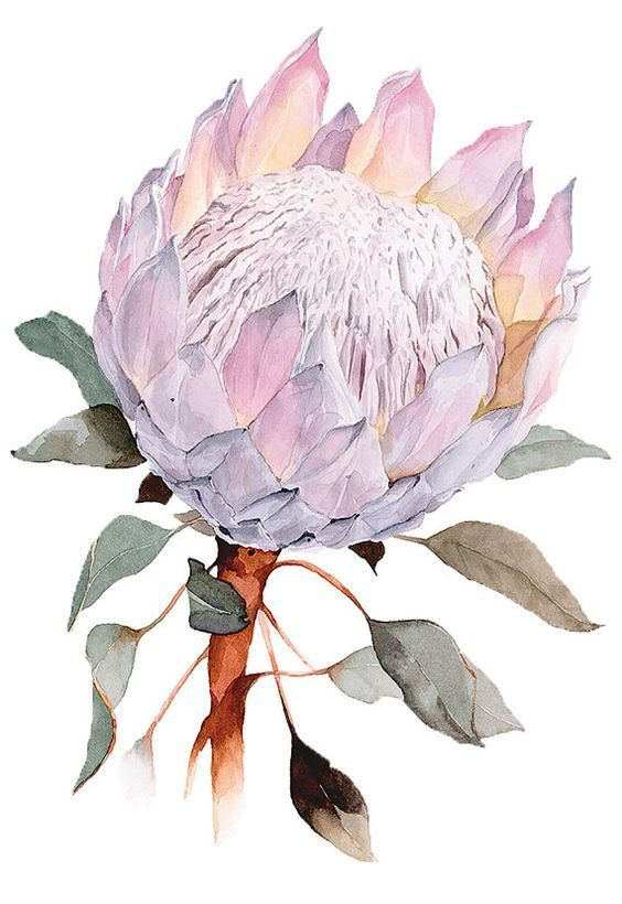 I Want That Bouquet Protea Art Floral Prints Art Watercolor Flowers