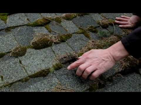 Moss Growing On Roof Tiles In 2020 Roof Roof Shingles Roof Tiles