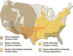 Of Poisonous Snakes In Us - Map of poisonous snakes in us