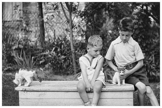 Boys Play with Kittens, Vintage 1920s Photo from Original Negative BW or Colorized