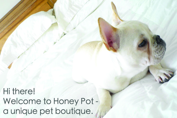 My Frenchie is the Home Page! #Frenchie #Frenchbulldog #PetBoutique