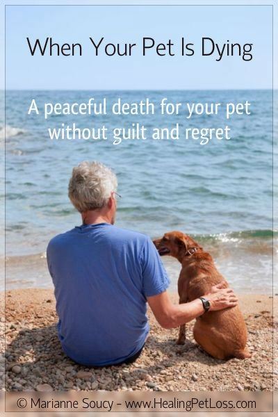 pet loss when your pet is dying download free report