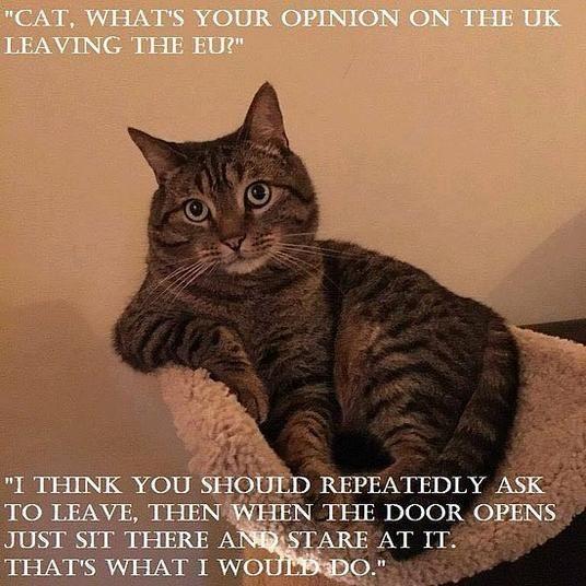 Ah! Die Briten sind also die Katzen Europas - #Brexit Cat
