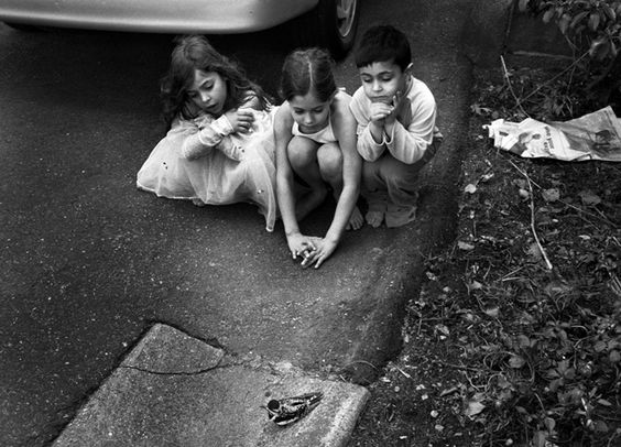 raina matar. Family Moments. Injured Bird, Brookline 2004.