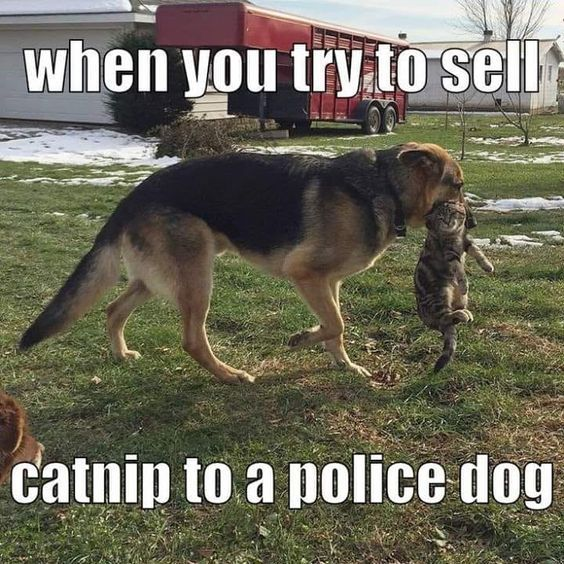 When You Try To Sell Catnip To A Police Dog Greykittens Police Dogs Humor Funny Dog Memes Dogs