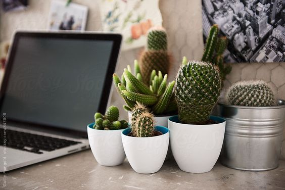 Several cacti and laptop on desktop by Guille Faingold