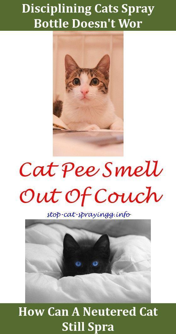 Cat Pee Tile Home Remedy Cat Repellent Spray Cat Cougar