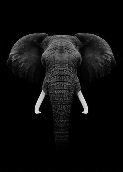 Black Elephant Animals Black And White Elephant Photography Elephants Photos