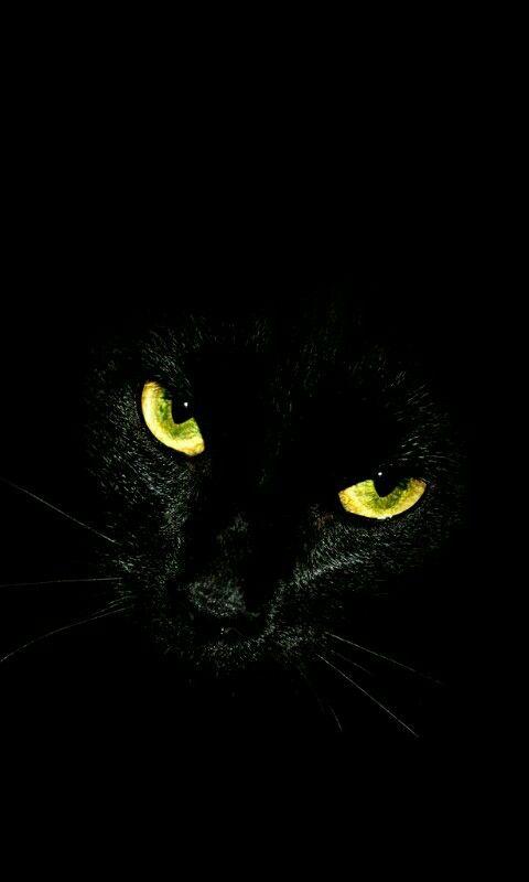 Fond D Ecran Chat Noir Dans Le Noir Fond D Ecran Chat Jolis Chats Animaux Mignons