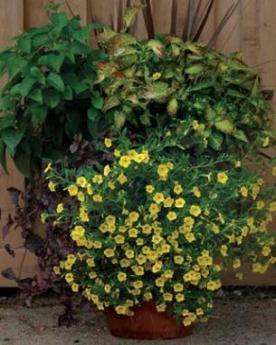 Container TLC | Fine Gardening