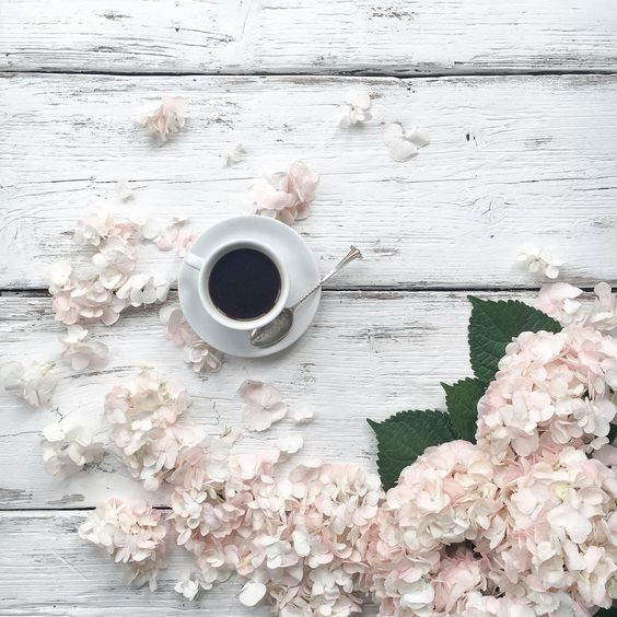 Good morning ☕️ . While I had these beautiful hydrangeas in my hands I photographed them in as many ways as I could think of! There's more on the blog about my biggest saviour in managing to still post here regularly, and a little round up of the month in photos.  Can't believe it's the last day of August! Have a lovely one ☕️