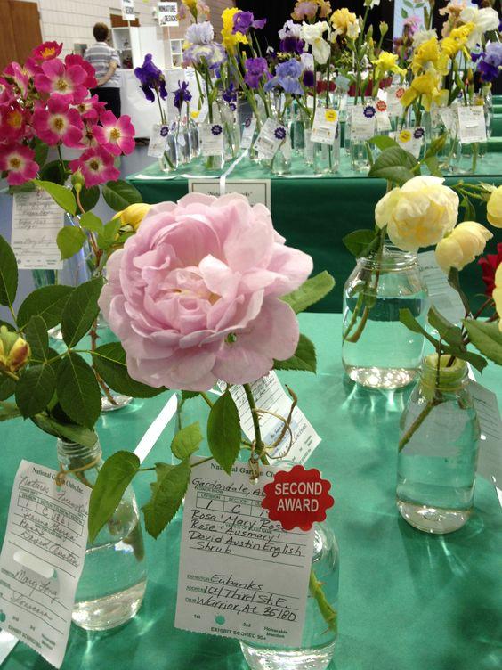 Winning Rose by Dallas Eubanks - Magnolia Garden Club Consultant