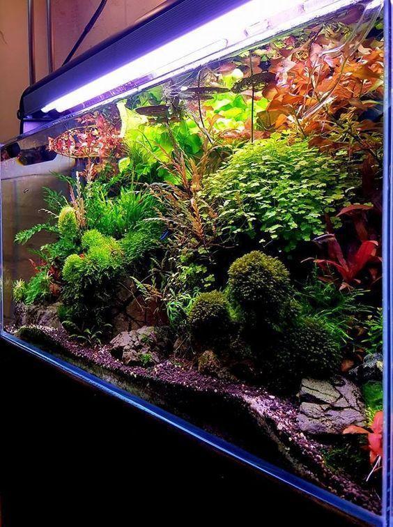 Current Usa Satellite Freshwater Led Plus Light For Aquarium 48 To 60 Inch Led Aquarium Lighting Aquarium Lighting Low Tech