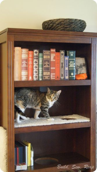 bookcase cat climber to be cats and shelves. Black Bedroom Furniture Sets. Home Design Ideas