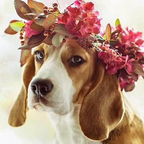 花冠をつけたおしゃれでかっこいい犬の壁紙