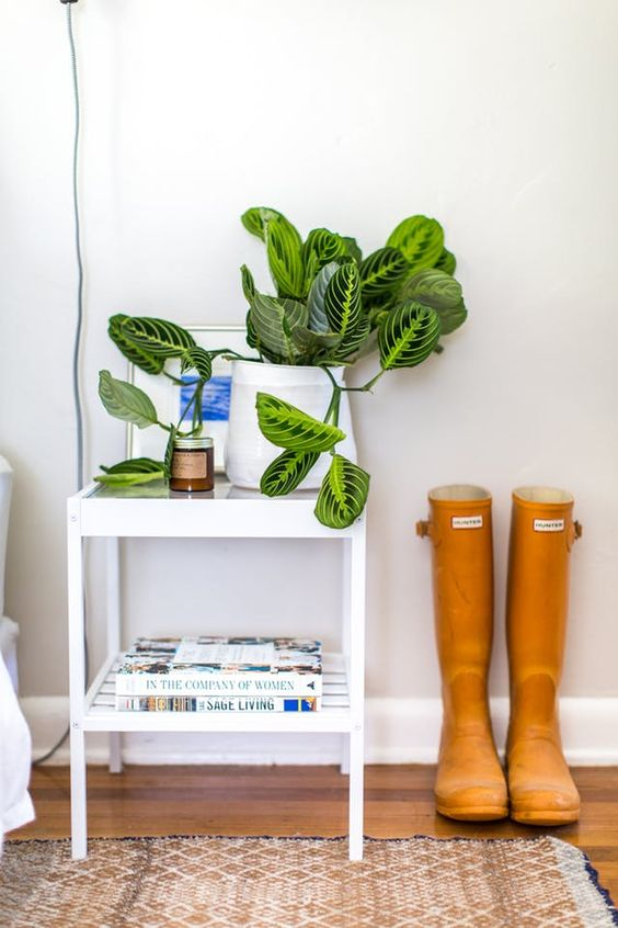 Prayer Plants - Maranta Care | Apartment Therapy