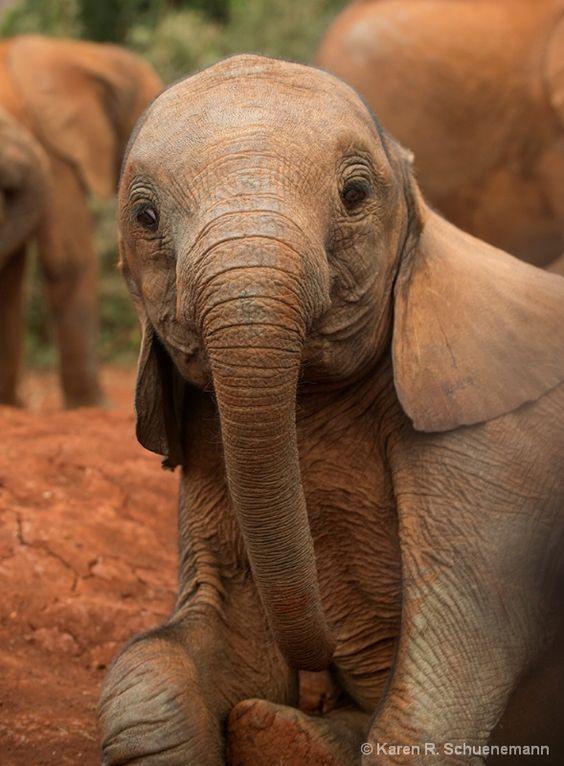 Quiero un bebito de estos ya!! / Young Elephant by Karen R. Schuenemann