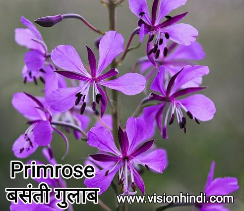 20 List Of Rare Flowers Name In Hindi With Picture Flowers Name In Hindi Flower Names Rare Flowers