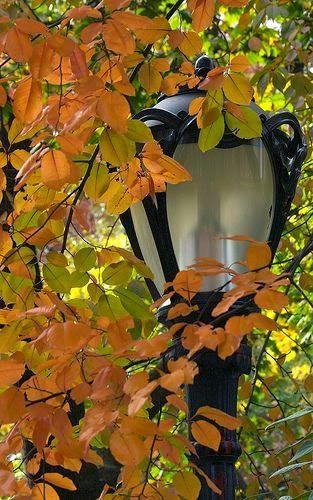 Algodão Tão Doce: outono