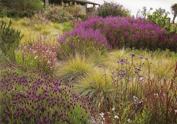 I spy a Spanish lavender, Verbena bonariensis, gaura and purple salvia in the back there. (Image from The American Meadow Garden by John Greenlee, photos by Saxon Holt. Fantastic book.)