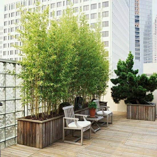 en bois avec bambou et arbustes sur la toiture terrasse brise vue avec
