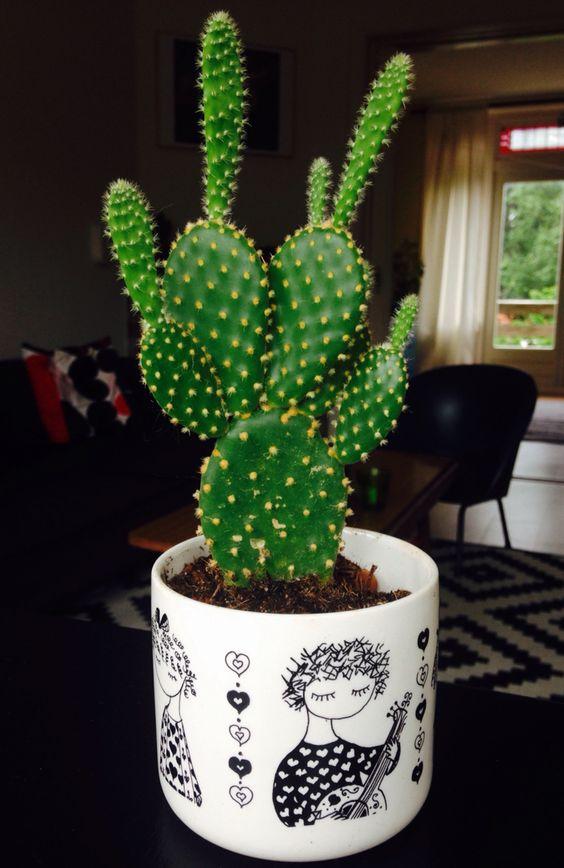 #retro #sphinx #cactus