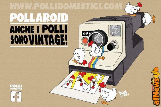 Polli Domestici - http://www.afnews.info/wordpress/2016/05/23/polli-domestici/