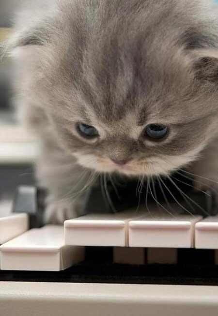 """癒しのLOVEにゃんこ!(猫画像&動画) on Twitter: """"猫ちゃんの画像にいやされたらRTしてね(=´∇`=) http://t.co/d9evvsY9ED"""""""