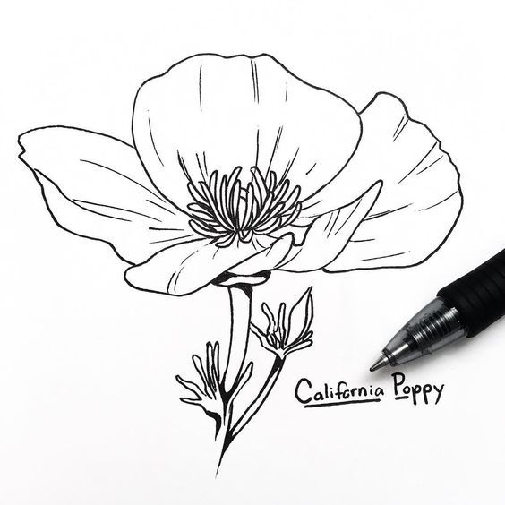 Pin By Lang On Shaoyao Flower Line Drawings Poppy Drawing California Poppy Tattoo