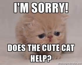 Best 21 I M Sorry Memes Sorry Memes Cute Cat Memes Apologizing Quotes