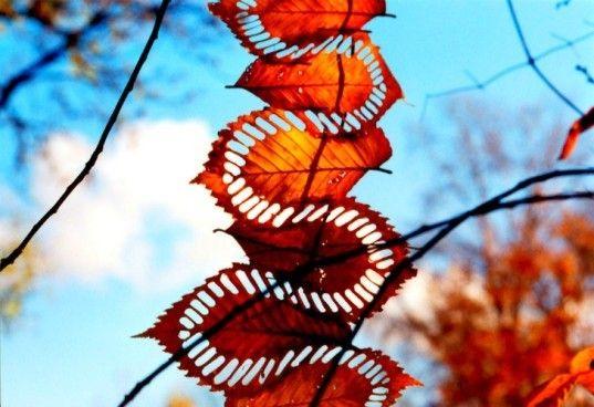 Walter Mason, leaf art, land art, leaves, eco art, organic art