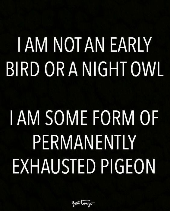 Perfect Permanently Exhausted Pigeon Relax They Say Take A Break They Say Right Parenting Moms F Bed Quotes Funny Funny Quotes 10th Quotes