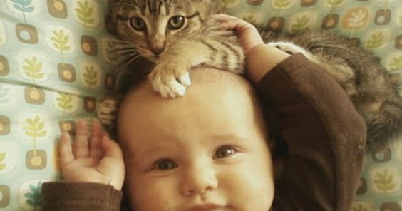 Babies Chilling With Their Kitty Cat Companions