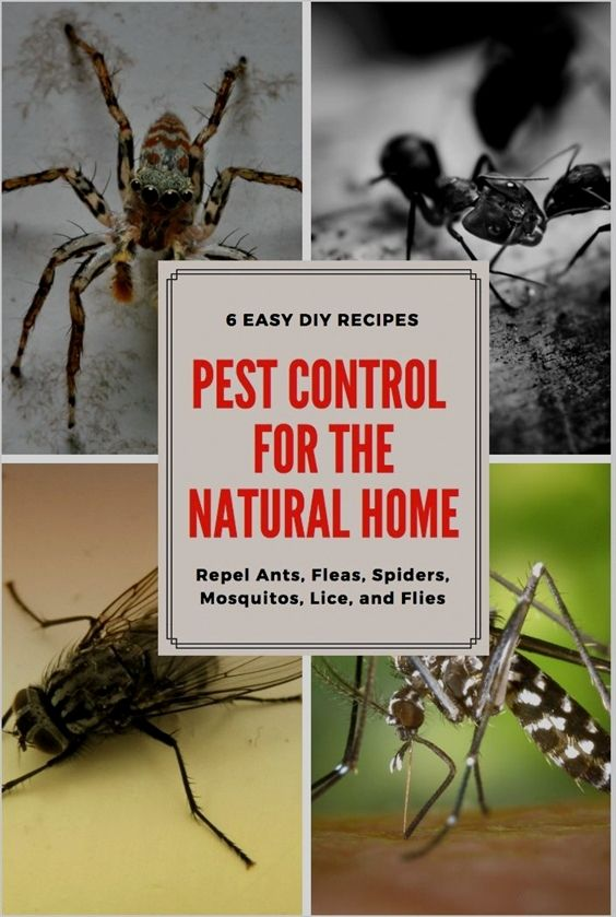Pest Control Concentrate Indoor Bryan Pest Control Niceville Pest Control Youtube Pest Control Services Near Me For Cockr Pest Control Mama Natural Pests